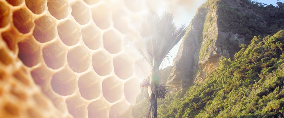 Rare World Honeys